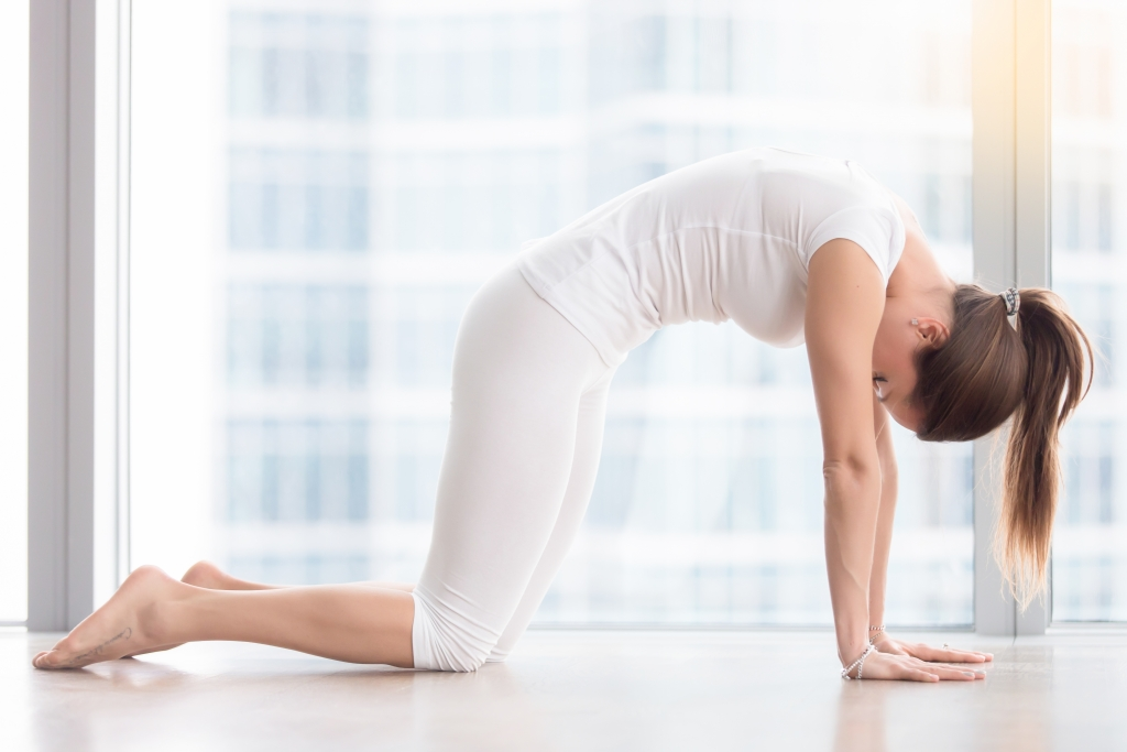 Young attractive woman in Marjaryasana pose against floor window